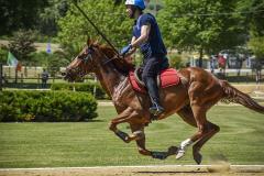 aaociazione-equestre-vallesina-09-05-2021-10